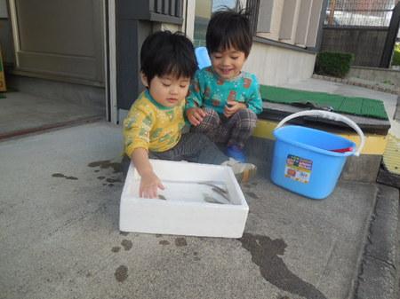 H27.10 ハゼと孫③.JPG
