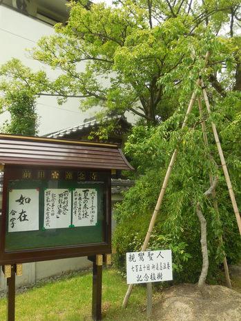 H29.6 速念寺⑤.JPG