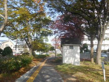 H29.11.15いい風景①.JPG