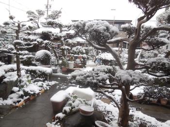 H30.1.26庭の雪景色②.JPG