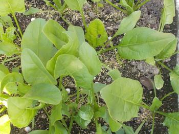 菜園3.JPG