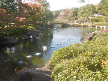 2019.11歩け歩け・白鳥庭園3.JPG