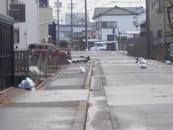 2020.1資源ゴミとカラス①.JPG