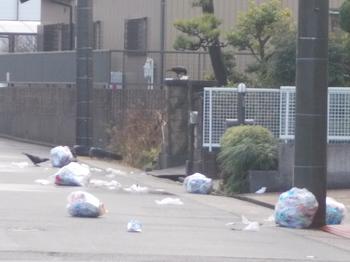 2020.1資源ゴミとカラス③.JPG